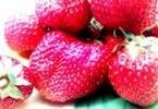 jakie owoce trzeba jesc