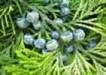 ziola sa dobre dla zdrowia i urody